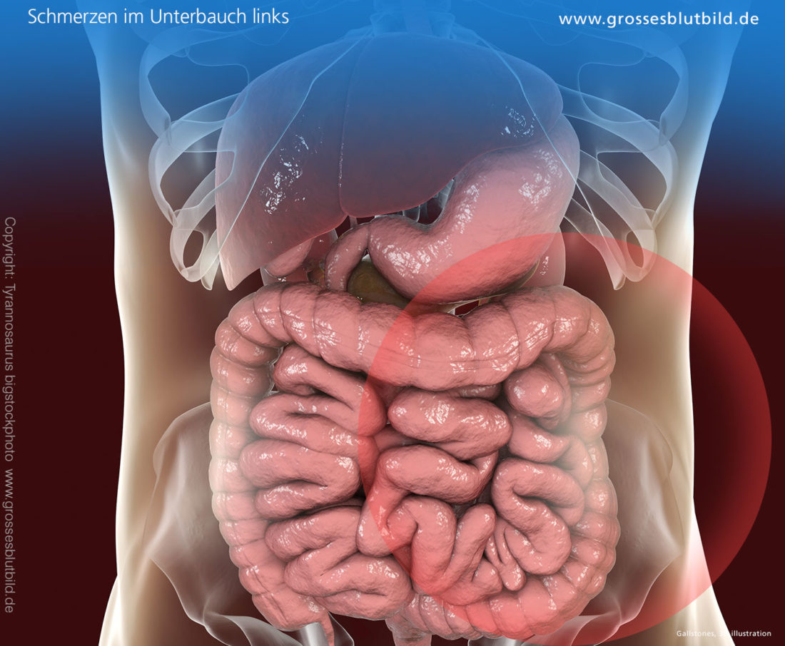 anatomie bauchraum