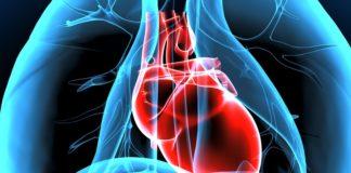 Herz muskel
