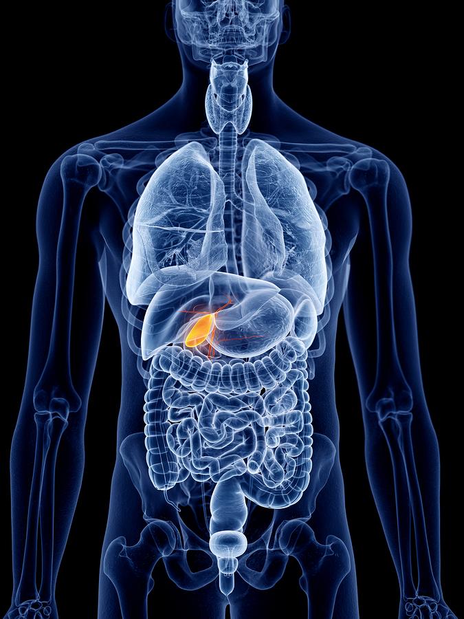 Gallenerkrankungen - Überblick über Erkrankungen der Gallenblase: