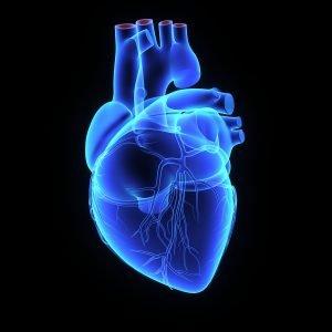 Kardiomyopathie und Herzmuskel