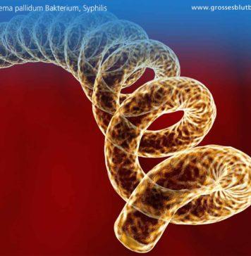 Treponema pallidum Bakterium, Syphilis