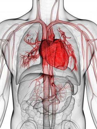 Systolischer Blutdruck und diastolischer Blutdruck