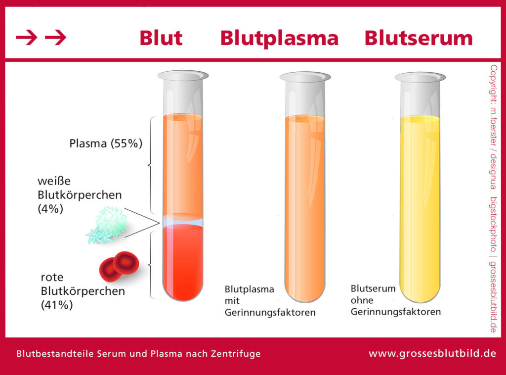 Blut Aufbereitung