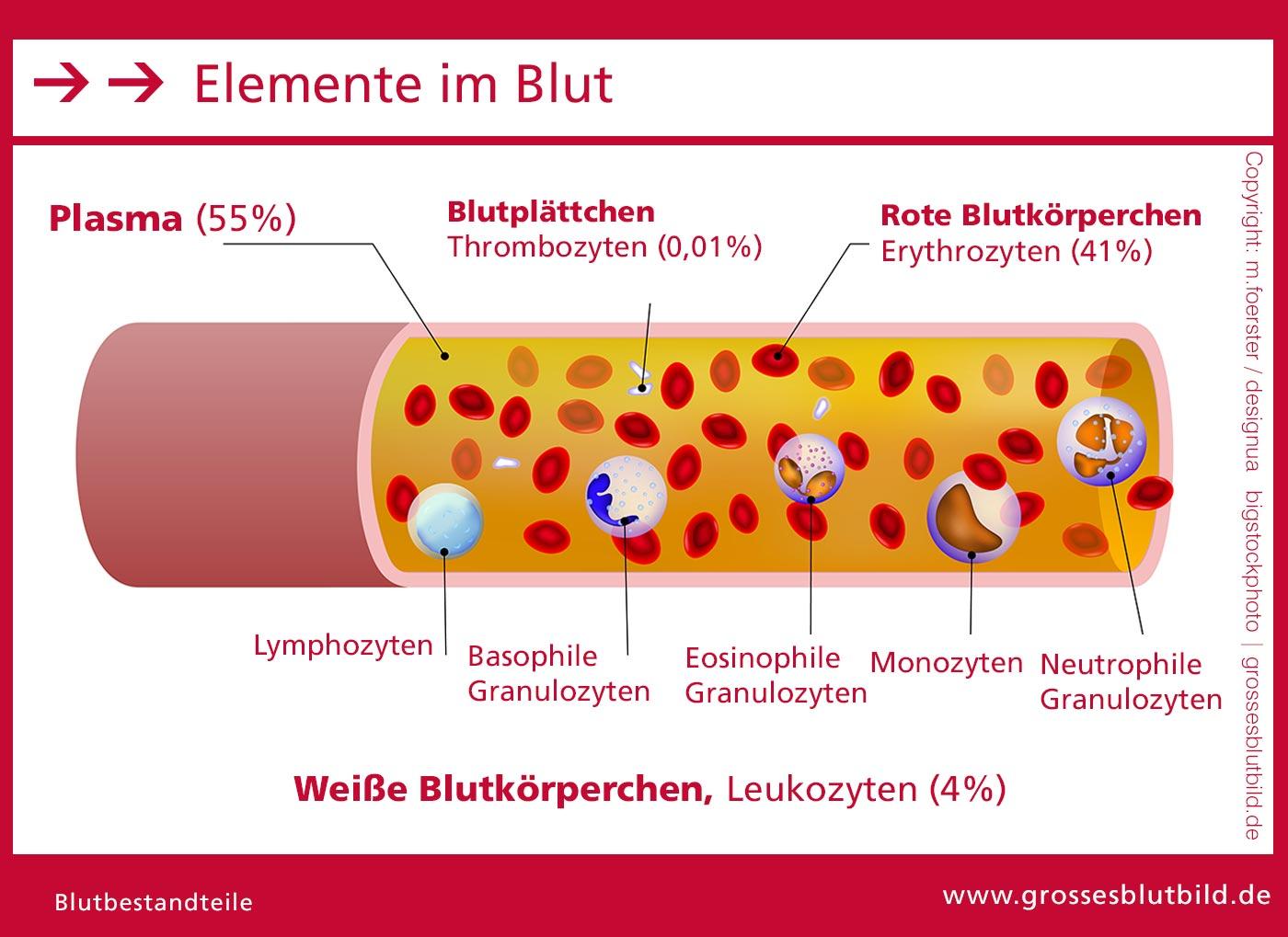 Das ist Blut - Zusammensetzung, Elemente