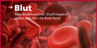 Blut - Rote Blutkörperchen in der 3D Darstellung