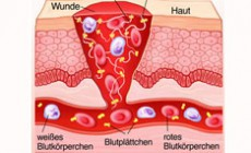 Die Blutgerinnung Ablauf der sekundären Hämostase - erklärt: