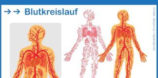 Blutkreislauf im menschlichen Körper