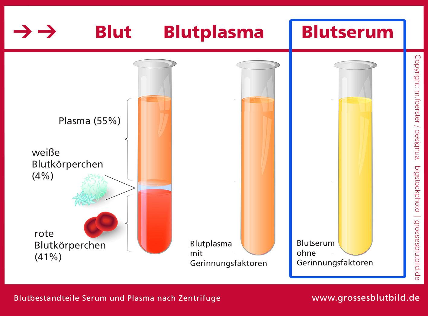 Blutserum
