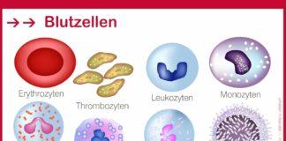 Blutzelle, Blutzellen
