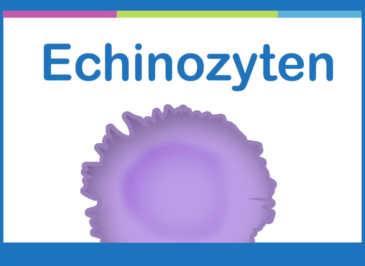 Echinozyten