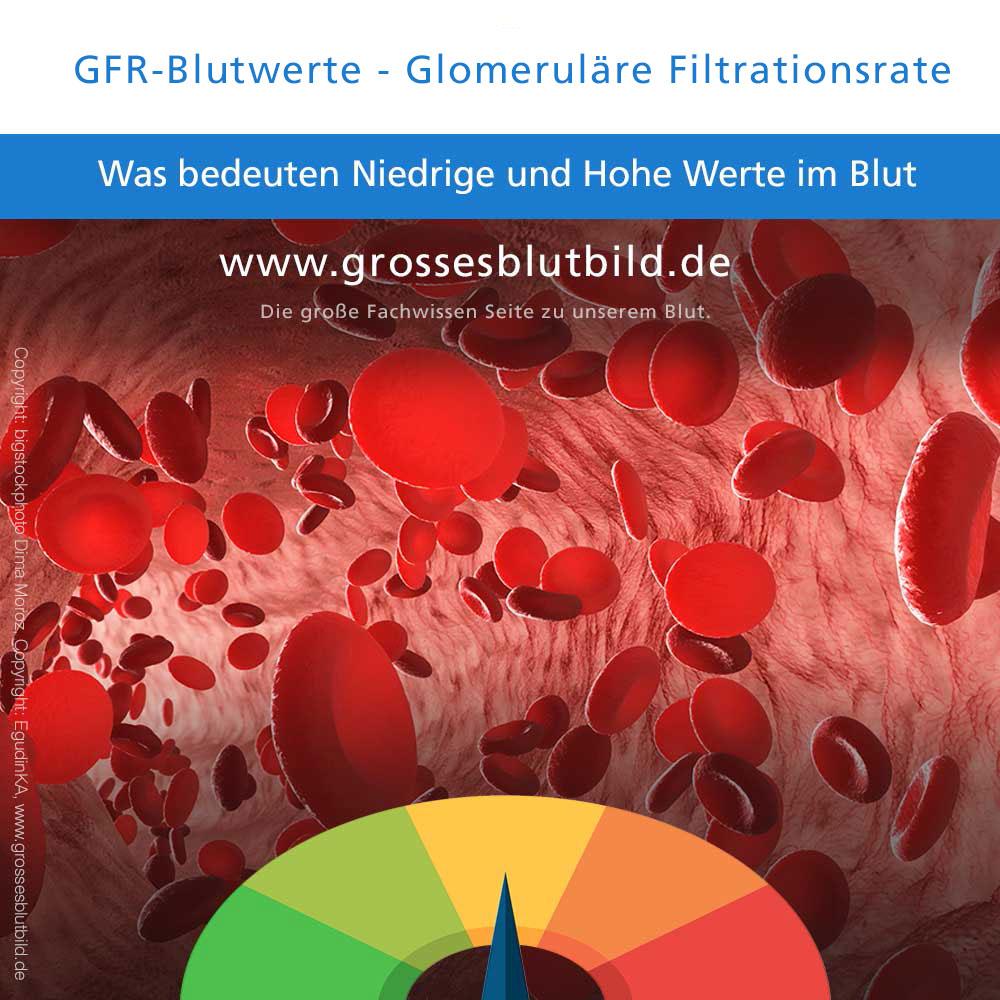 GFR-Blutwerte zu niedrig oder erhöht