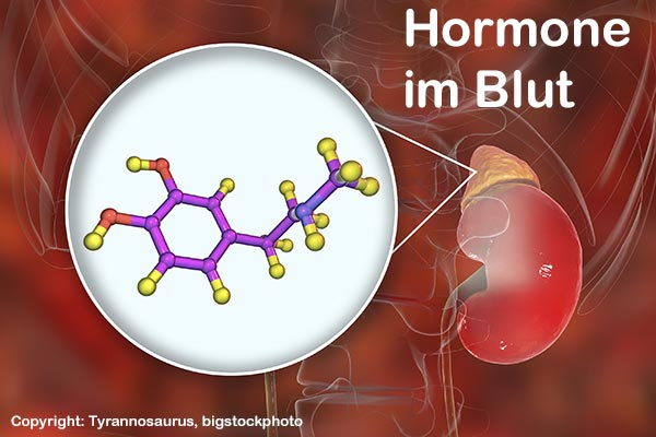 Hormon im Blut