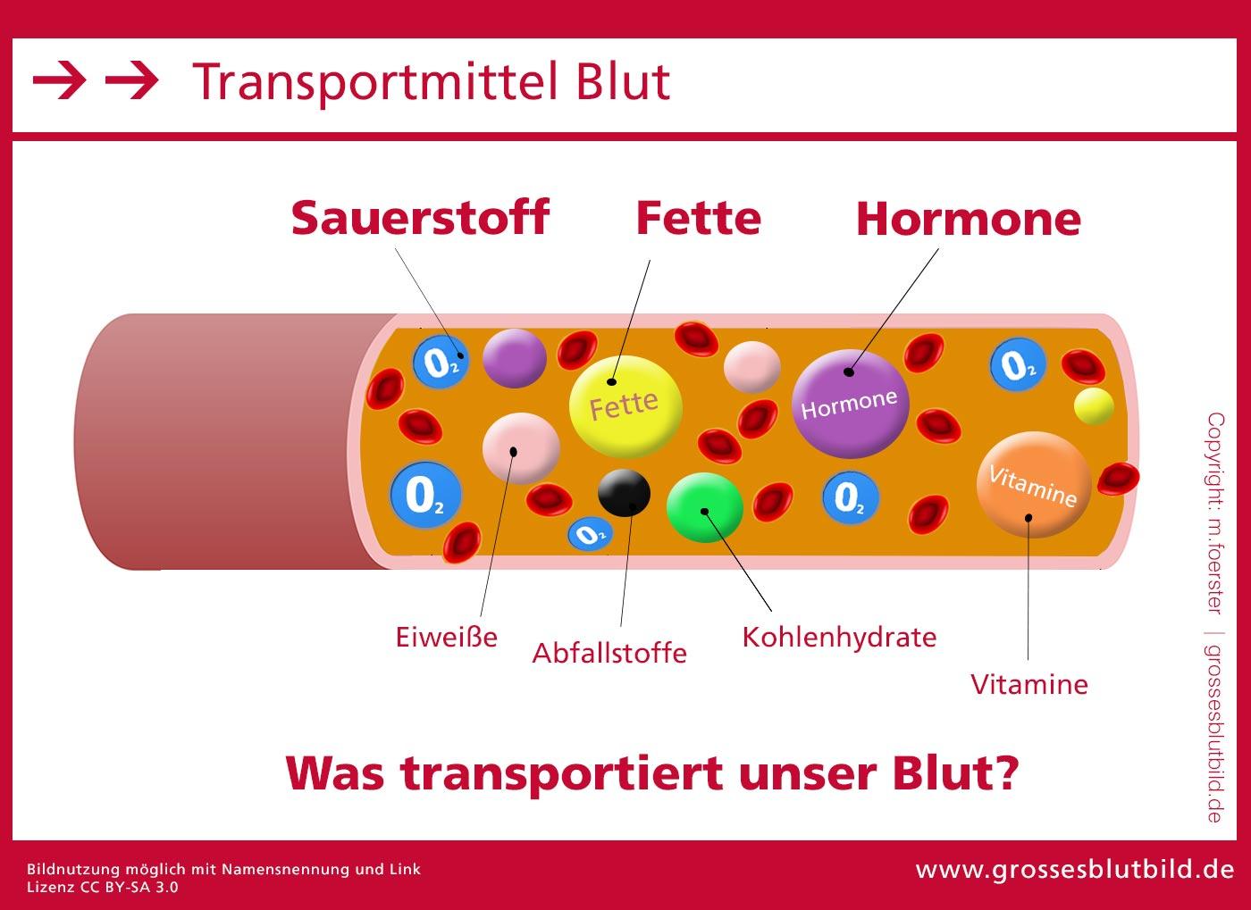 Hormone im Blut