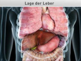 Lage der Leber
