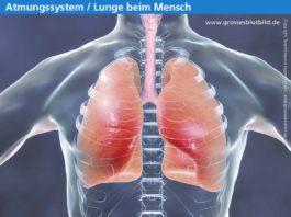 Erkrankungen der Lunge im Überblick