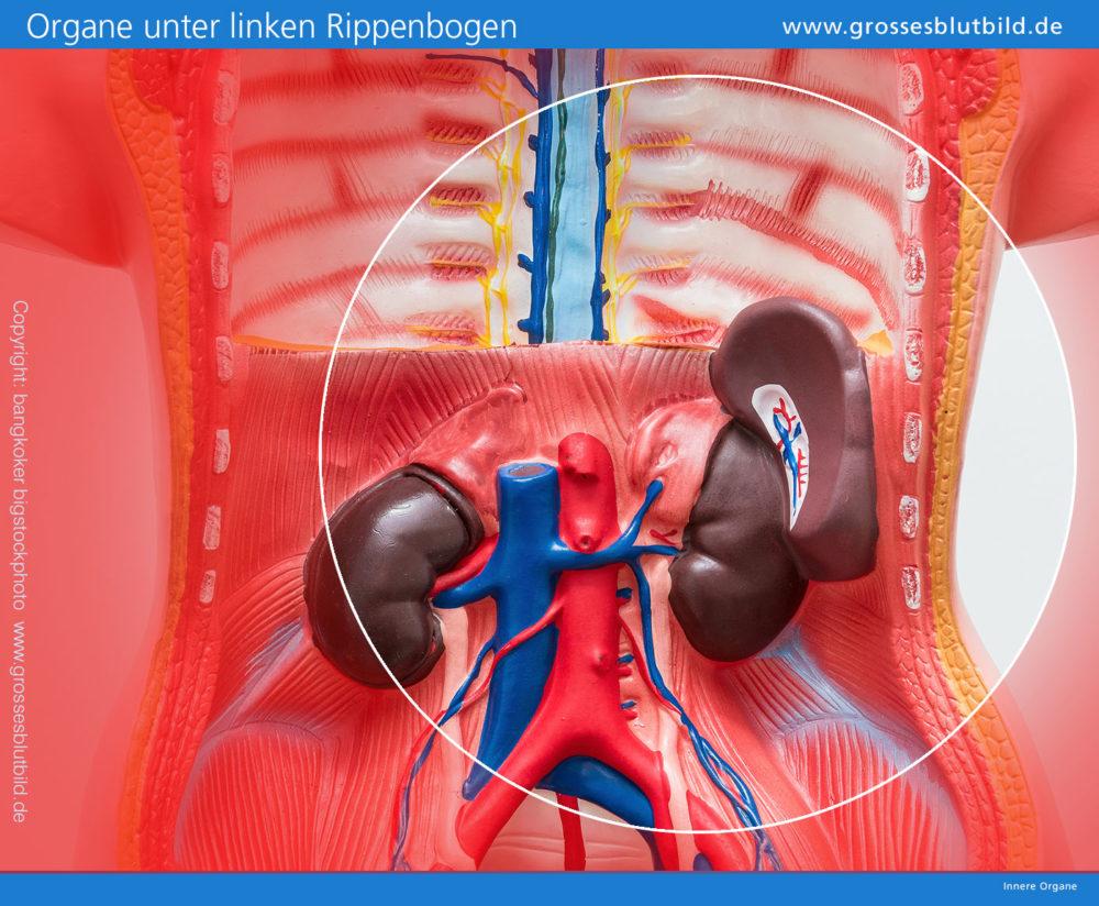 Welche Organe Liegen Unter Der Linken Rippe Ursachen Bei Schmerzen