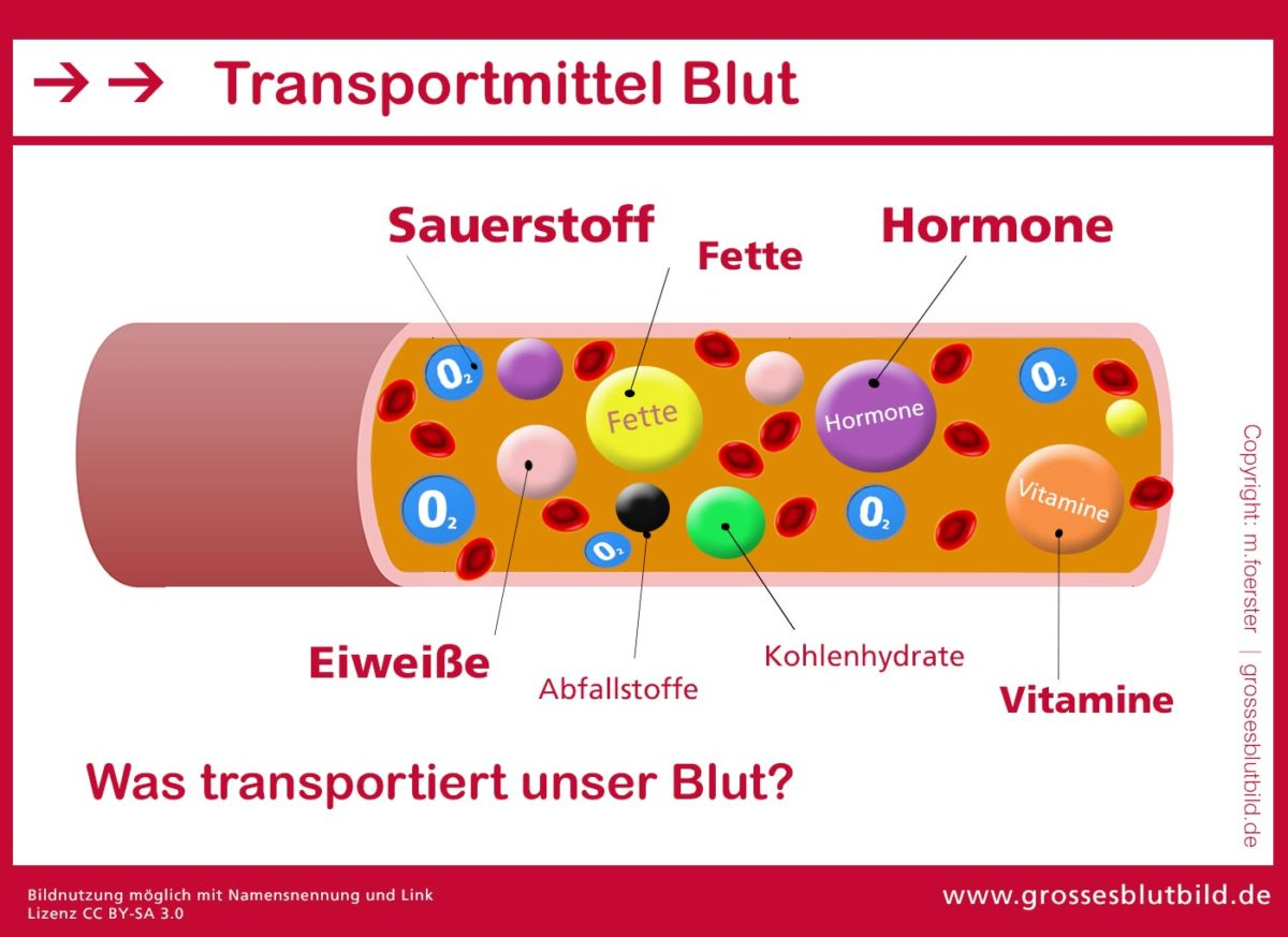 Transportmittel Blut -