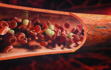 Blutbahn mit Zellen