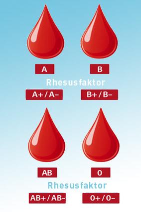 Welche Blutgruppen passen zusammen?