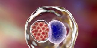 chlamydien heimtest grossesblutbild.de