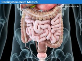 Innere Medizin - Symptome, Erkrankungen und Untersuchungen