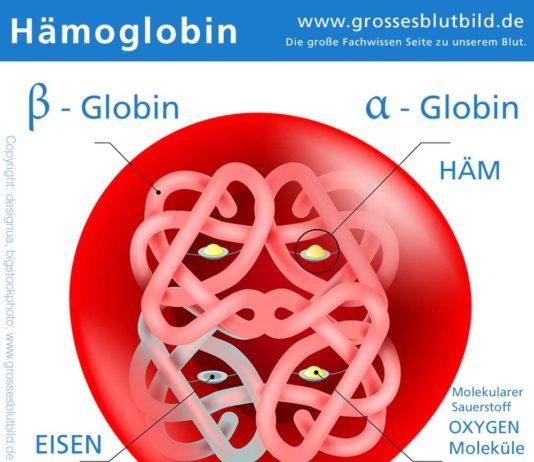 Hämoglobin Darstellung www.grossesblutbild.de