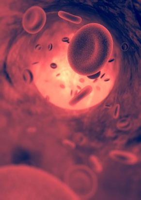 Das Blutsystem und der Sauerstoff